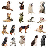 Honden Royalty-vrije Stock Afbeelding