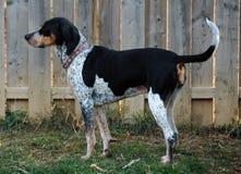 Honden 210 Stock Foto's