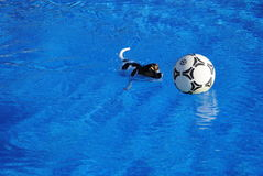 Honden Στοκ εικόνα με δικαίωμα ελεύθερης χρήσης