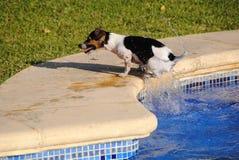Honden Στοκ Φωτογραφία
