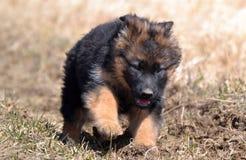 Honden 00012 Royalty-vrije Stock Foto's