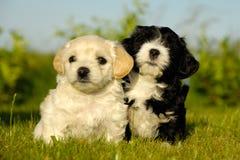 Honden Stock Afbeeldingen