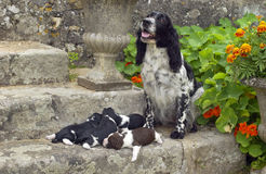 Honden stock foto's
