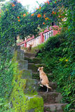 honden Stock Afbeelding