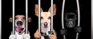 Honden achter de tralies in gevangenisgevangenis Stock Foto's