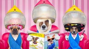 Honden bij de kappers of groomer stock foto