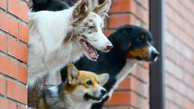 Honden bij de plattelandshuisjeportiek stock video