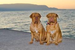 Honden bij de zonsondergangpijler Royalty-vrije Stock Foto's