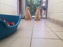 Honden bij een reddingsschuilplaats stock foto's