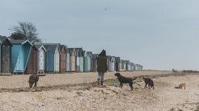 Honden bij het strand Stock Foto