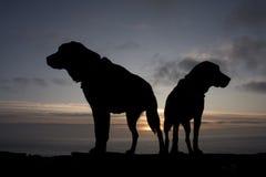Honden bij zonsondergang Royalty-vrije Stock Foto