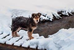Honden in de sneeuw Stock Foto