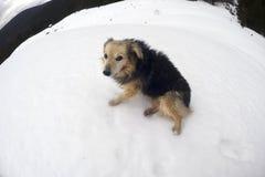 Honden in de sneeuwstormbergen Royalty-vrije Stock Fotografie