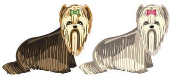 Honden - de terriër van Yorkshire Royalty-vrije Stock Afbeelding