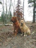 Honden die in bos zitten Royalty-vrije Stock Afbeelding
