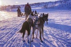 Honden die een ar bij zonsondergang in het sneeuwlandschap wachten te trekken Royalty-vrije Stock Fotografie