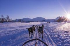 Honden die een ar trekken bij zonsondergang in Noorwegen Stock Afbeelding