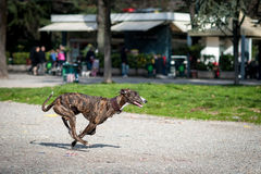 Honden die en in een park spelen lopen Royalty-vrije Stock Afbeelding