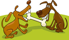 Honden die met been spelen Stock Foto's