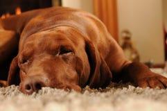 Honden die op het tapijt slapen Royalty-vrije Stock Foto's