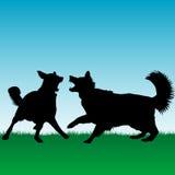Of honden die in openlucht vechten spelen Stock Afbeeldingen
