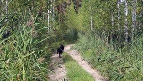 Honden die snel lopen stock footage