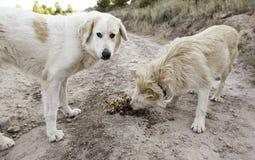 Honden die vrienden eten Stock Fotografie