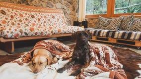 Honden in een chalet stock afbeelding