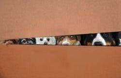 Honden in een doos Stock Afbeeldingen