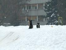 Honden in een stad tijdens de winter stock footage