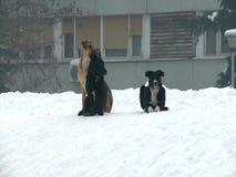 Honden in een stad tijdens de winter stock videobeelden