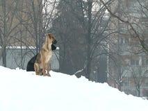 Honden in een stad tijdens de winter stock video