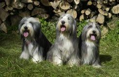 Honden in een tuin stock afbeeldingen