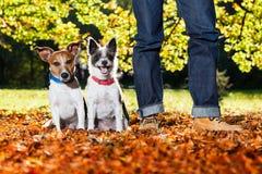 Honden en eigenaar Stock Foto's