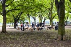 Honden en eigenaars Royalty-vrije Stock Foto