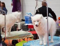 Honden en hun eigenaars royalty-vrije stock afbeelding