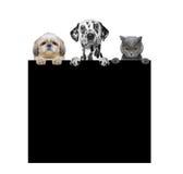Honden en kat die een kader in hun poten houden stock fotografie