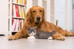 Honden en katten Stock Afbeelding
