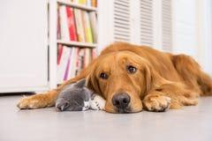 Honden en katten Royalty-vrije Stock Afbeeldingen