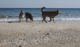 Honden en zeemeeuwen bij het strand royalty-vrije stock afbeeldingen