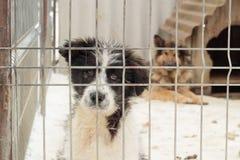 Honden in gevangenschap stock foto's