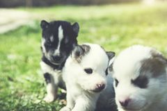Honden in groen gras royalty-vrije stock foto