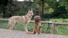 Honden in het park stock video
