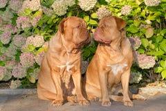 Honden in het park Stock Foto