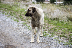 Honden, honden, honden, de beelden van portrethonden, honden in verschillende rassen, het liggen honden, het spelen honden, slaap Royalty-vrije Stock Afbeelding