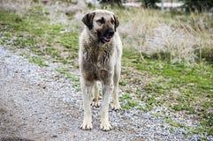 Honden, honden, honden, de beelden van portrethonden, honden in verschillende rassen, het liggen honden, het spelen honden, slaap Royalty-vrije Stock Afbeeldingen