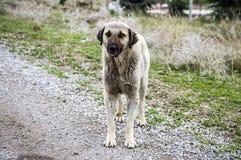 Honden, honden, honden, de beelden van portrethonden, honden in verschillende rassen, het liggen honden, het spelen honden, slaap Stock Foto's