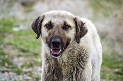 Honden, honden, honden, de beelden van portrethonden, honden in verschillende rassen, het liggen honden, het spelen honden, slaap Royalty-vrije Stock Foto