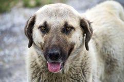 Honden, honden, honden, de beelden van portrethonden, honden in verschillende rassen, het liggen honden, het spelen honden, slaap Stock Afbeelding