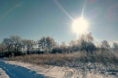 Honden op een snow-covered landelijke weg Dorpsstraat, de winter, sneeuw, afwijkingen, zonnige dag Royalty-vrije Stock Afbeeldingen